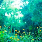 植物エキスって本当にやさしいの?薬効は本当にあるの?